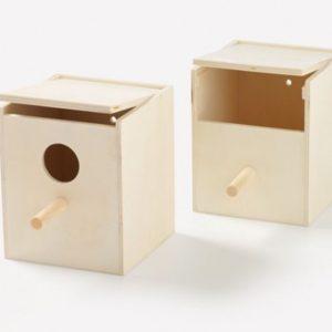 Nest Box Finch