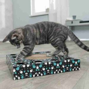 Scratching Cardboard With Toy
